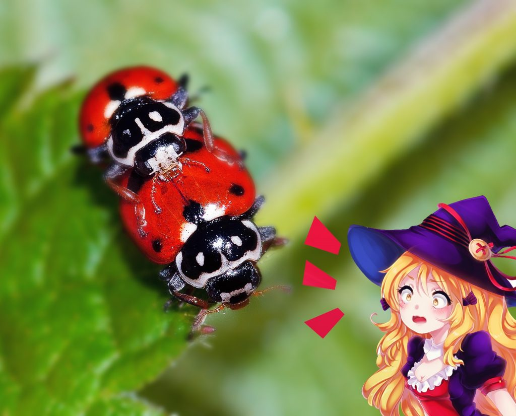 Mating ladybugs